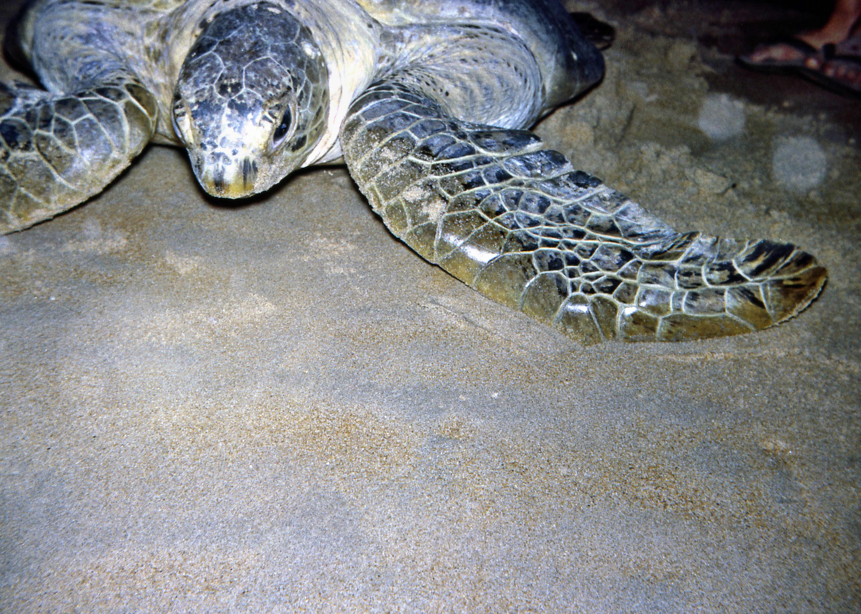 Turtle-3.jpeg