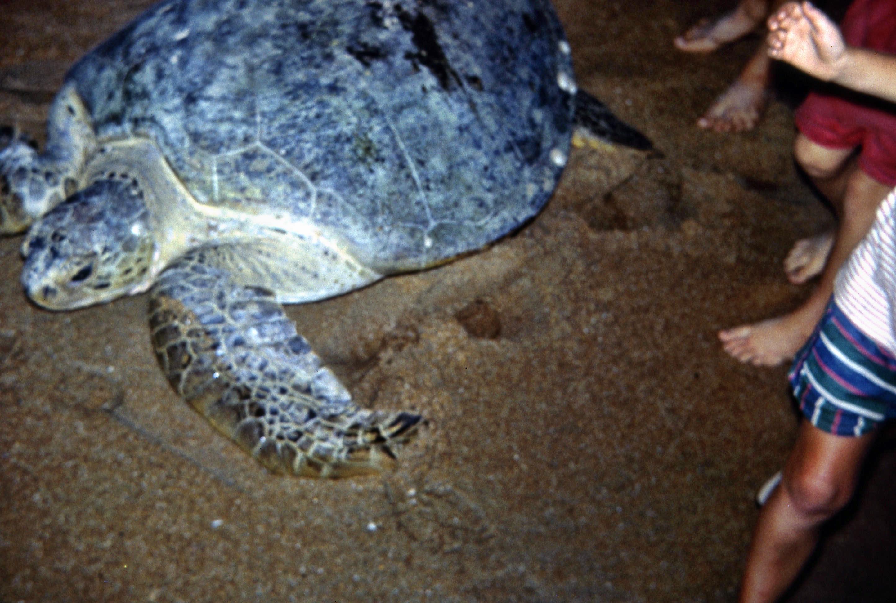 Turtle-5.jpeg