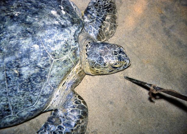 Turtle-2.jpeg