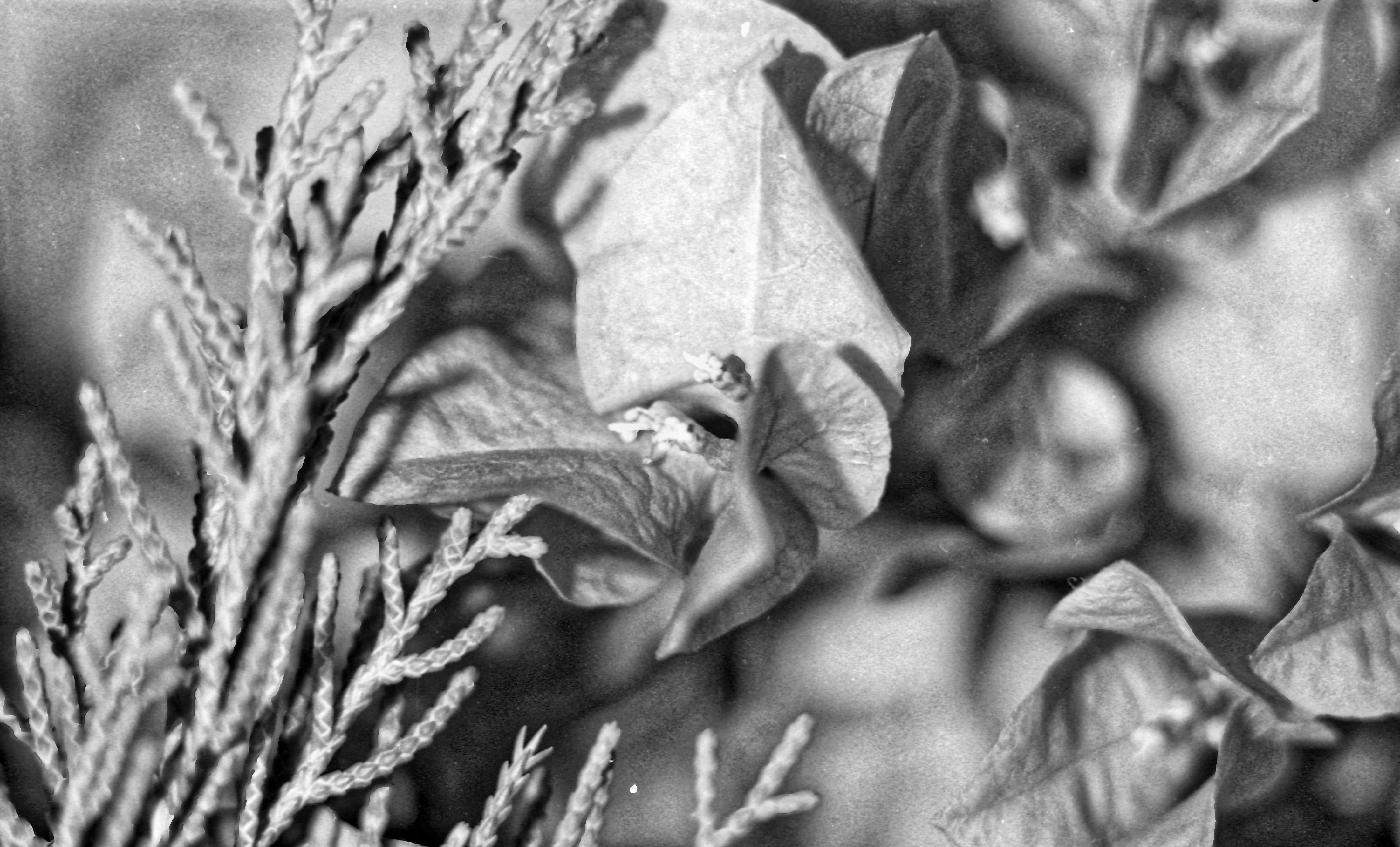 Flowers-4.jpeg