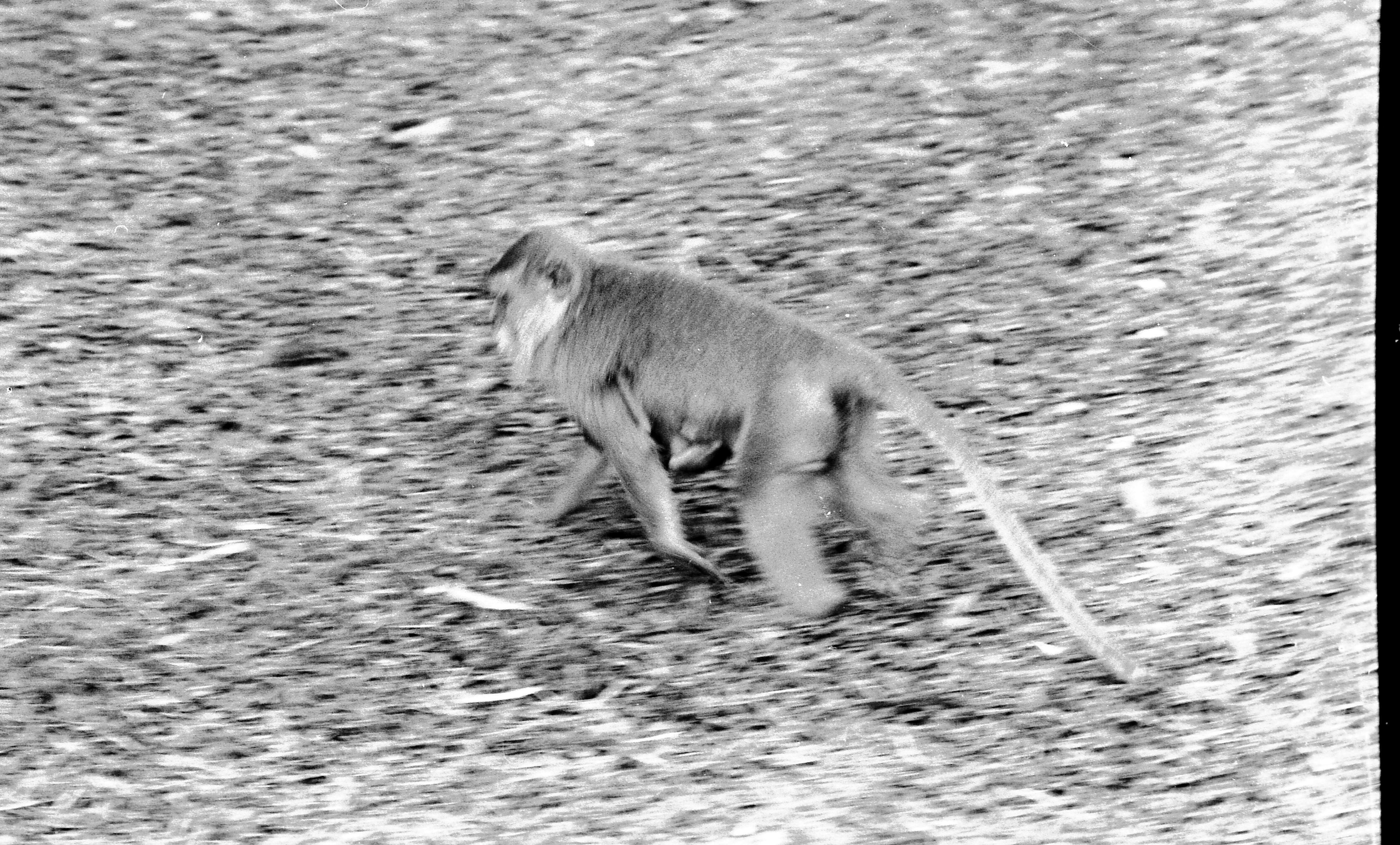 Monkey-2.jpeg