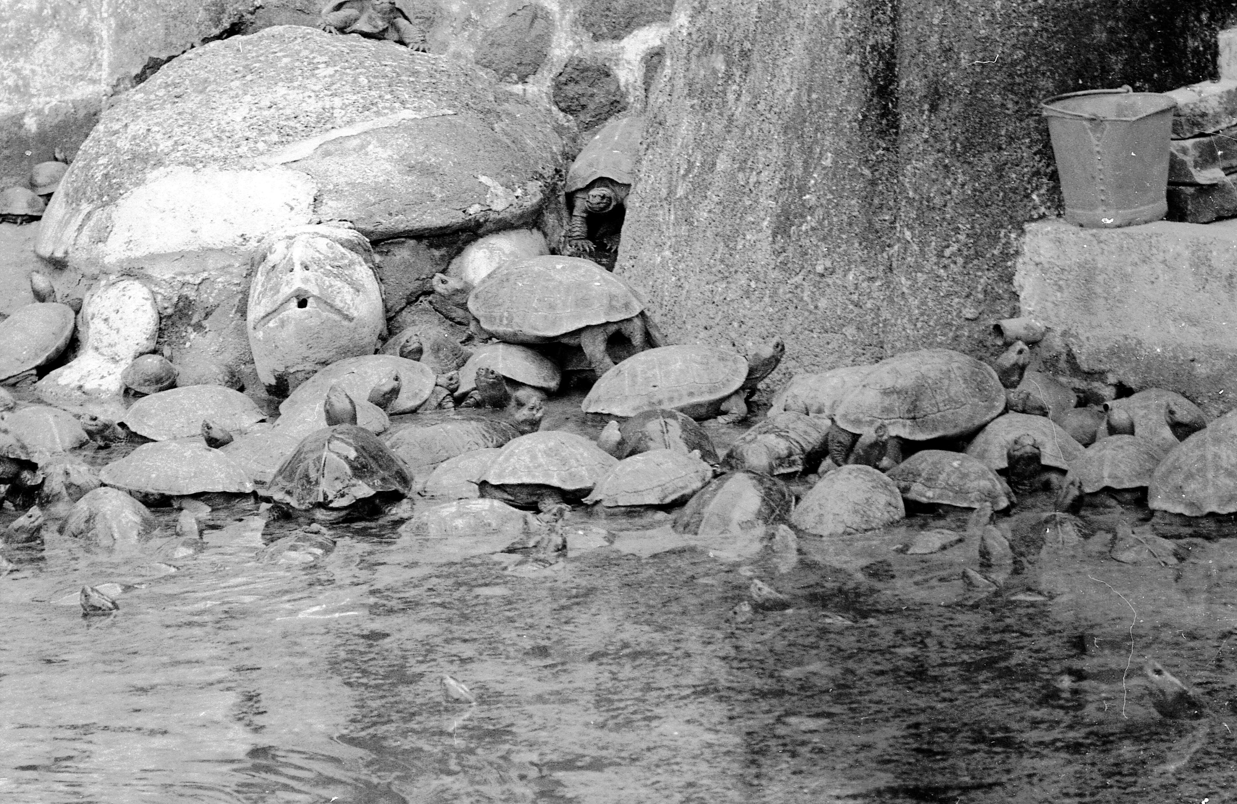 Tortoises-2.jpeg