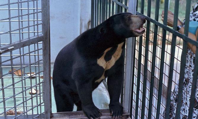 Bear-1.jpeg