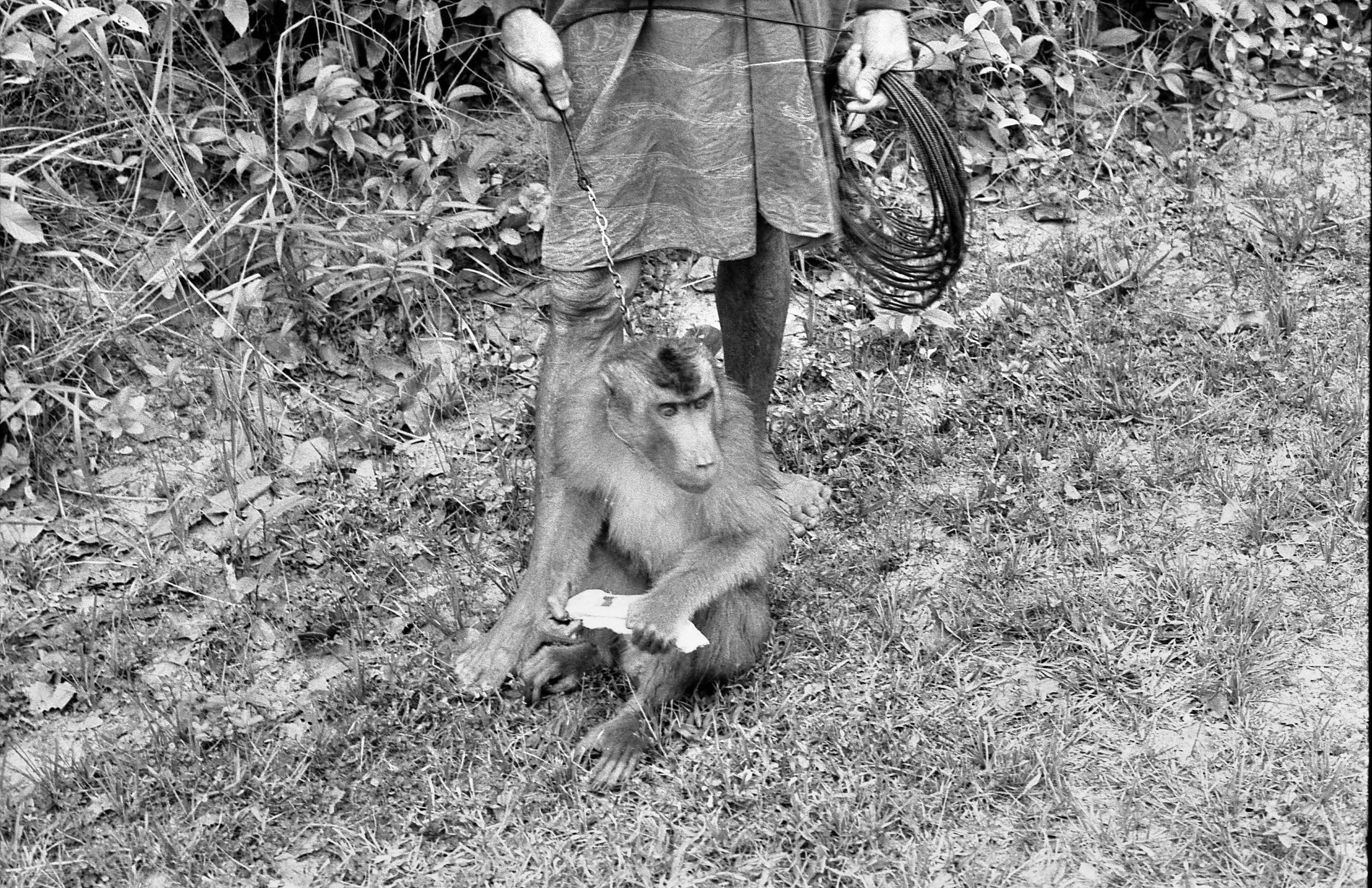 Monkey-1.jpeg