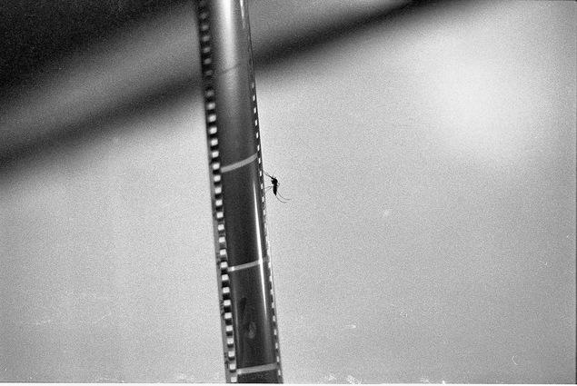 Film.jpeg