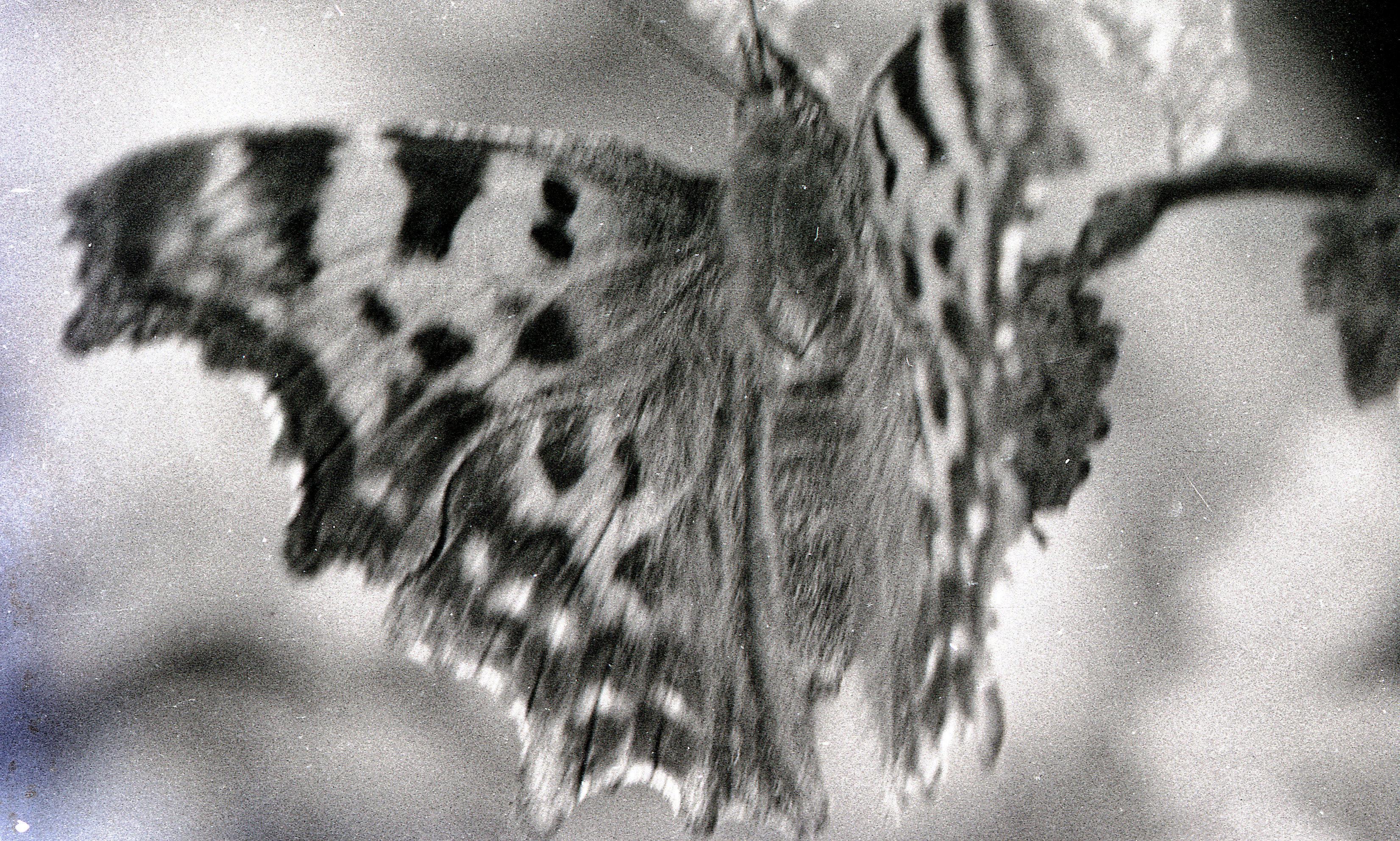 Butterfly-1.jpeg