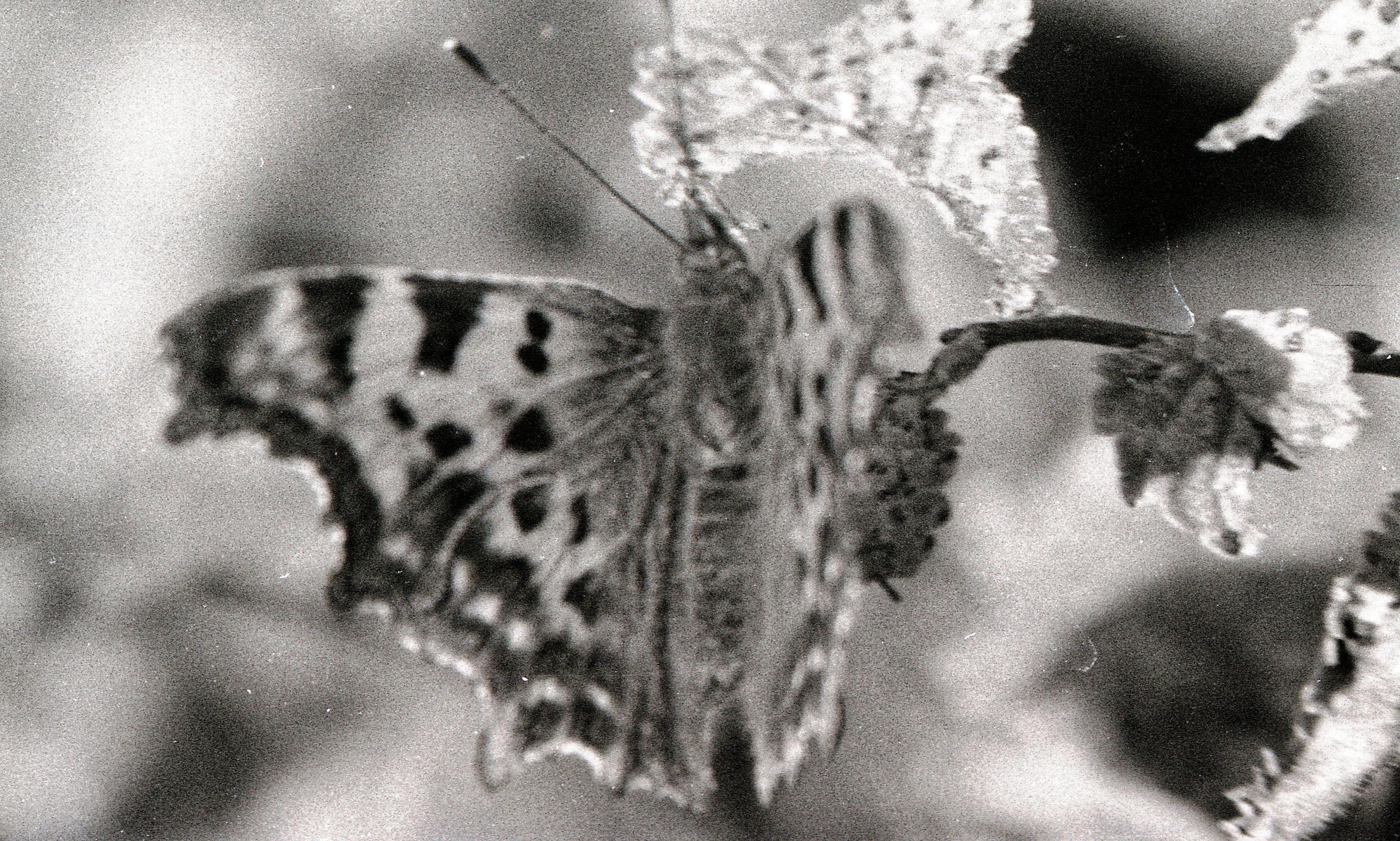 Butterfly-2.jpeg