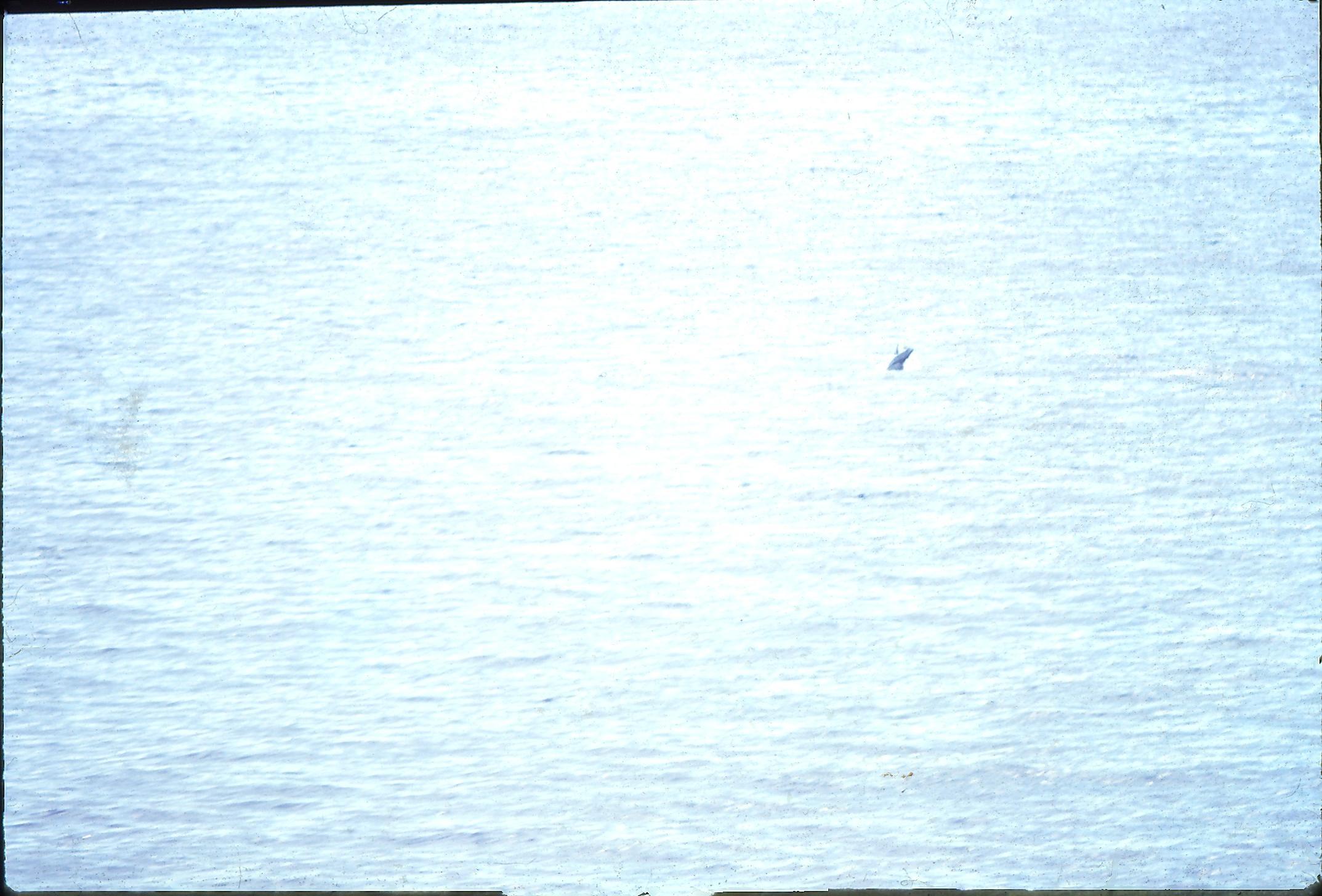 11-Dolphins-1.jpeg