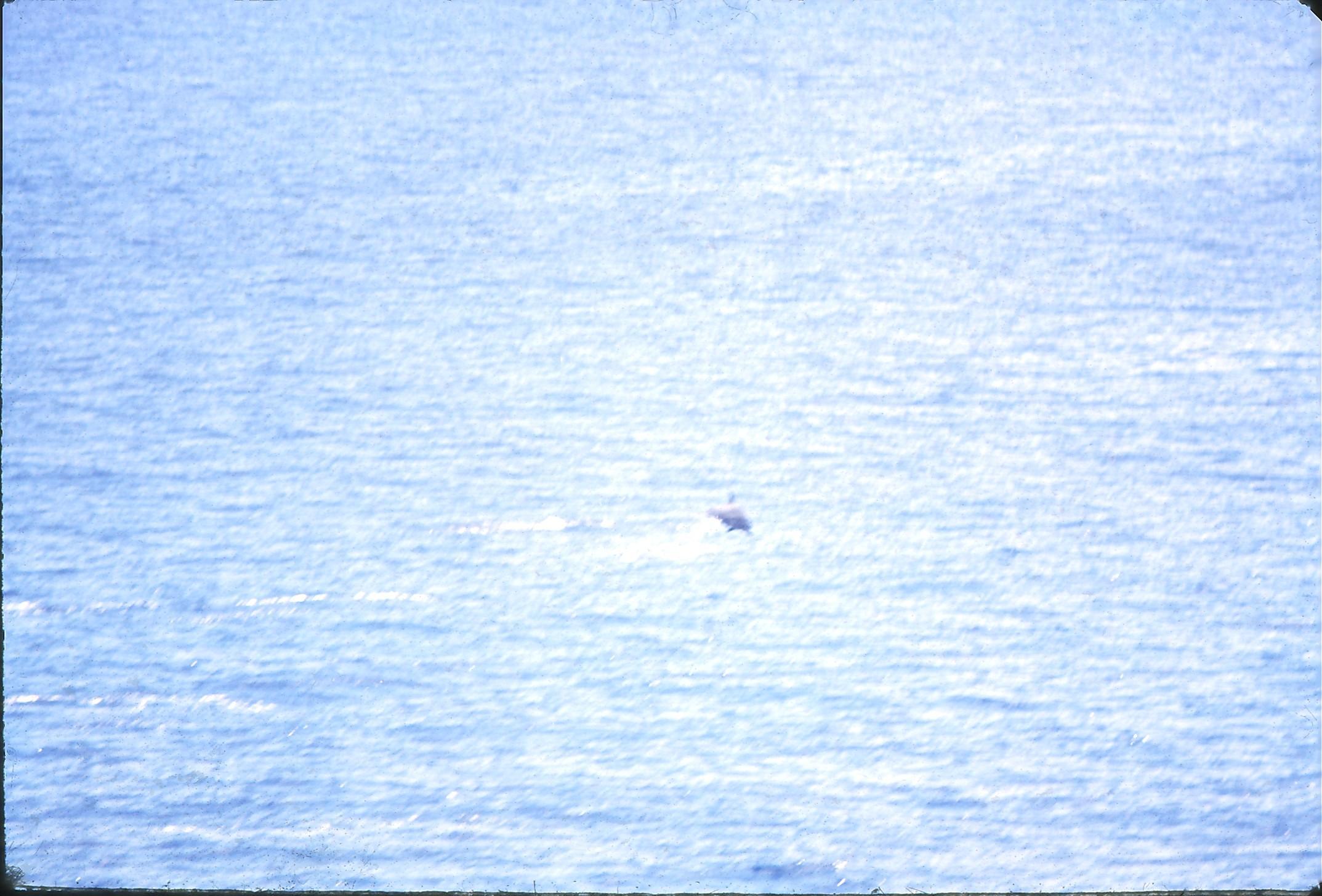 14-Dolphins-4.jpeg