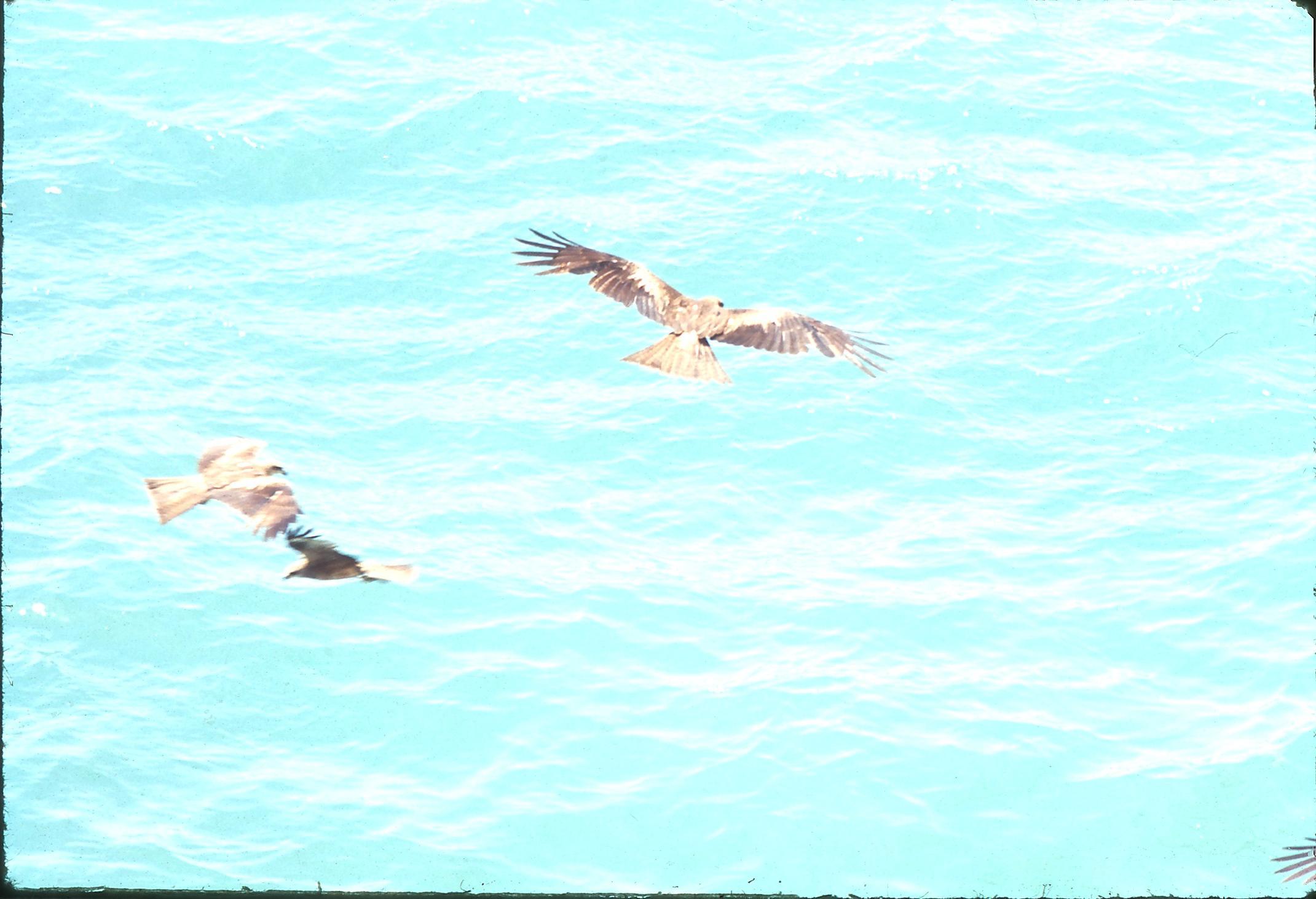23-Birds-1.jpeg