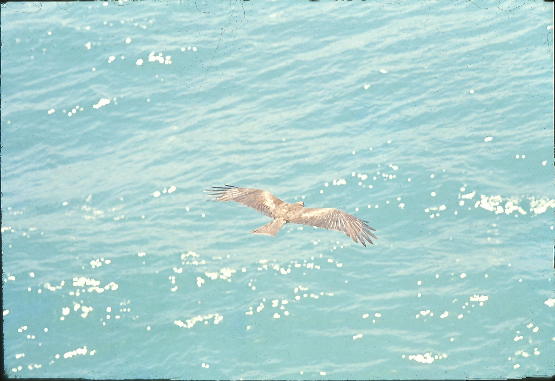 28-Birds-6.jpeg
