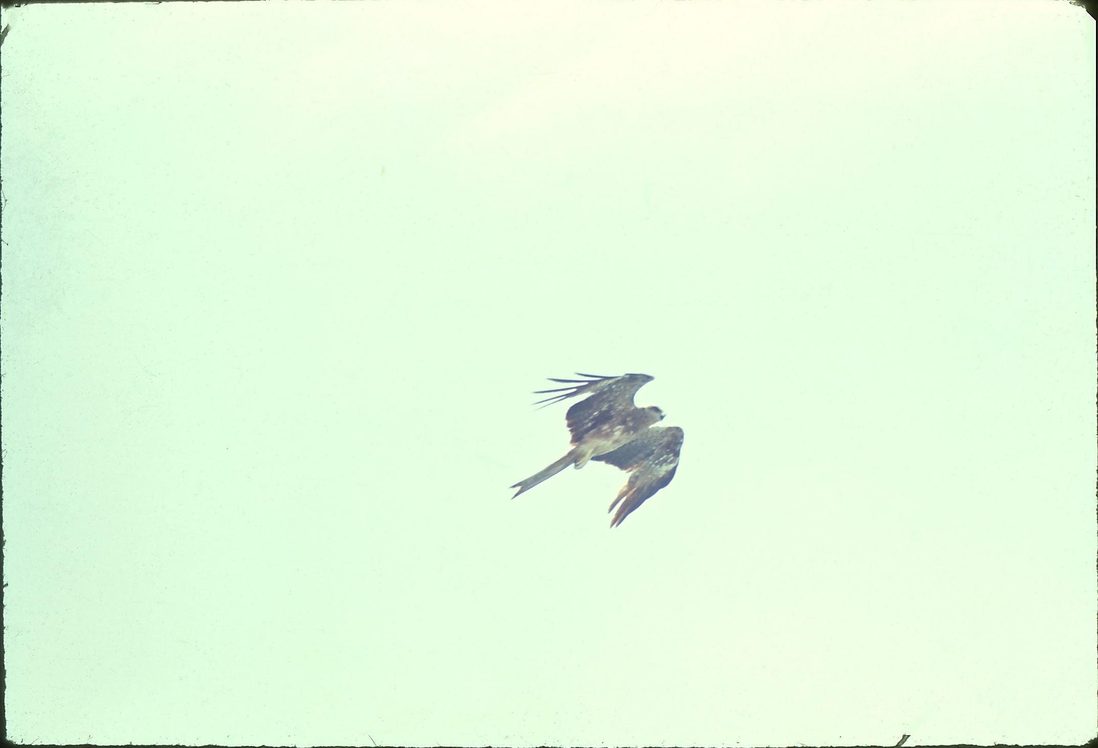 31-Birds-8.jpeg
