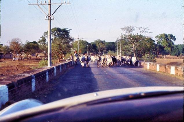 04-Cows-1.jpeg