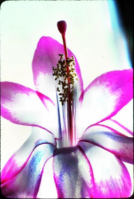 Flower-2.jpeg