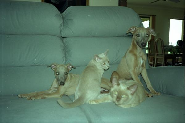 dogs-and-cats-1.jpeg
