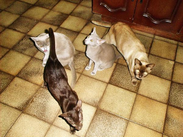 all-cats-in-kitchen.jpeg