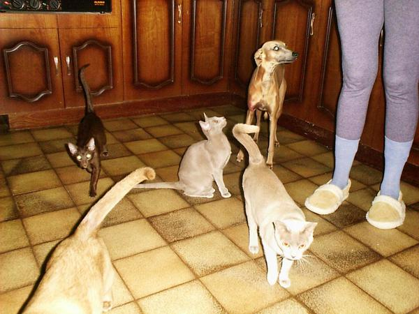 animals-in-kitchen.jpeg