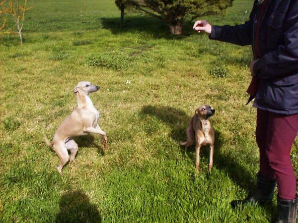 Dogs-begging.jpeg