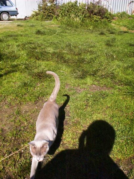 Lilac-approaching.jpeg