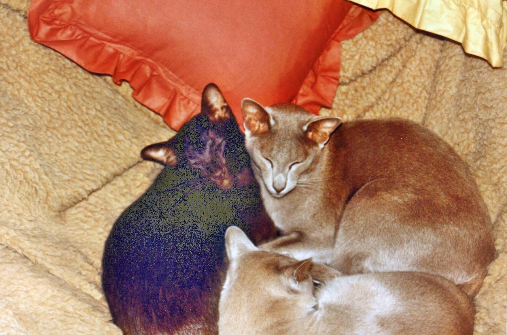 Cats-2.jpeg