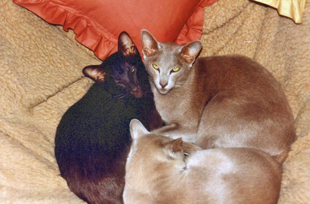 Cats-3.jpeg