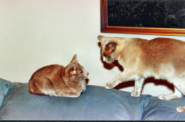 Cats-5.jpeg