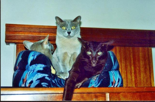 Cats-7.jpeg