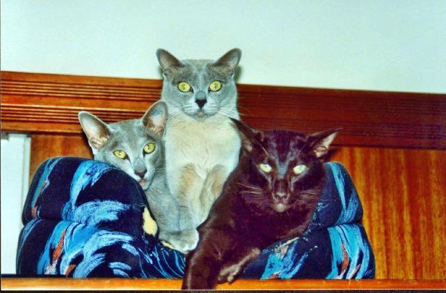 Cats-8.jpeg