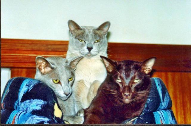 Cats-9.jpeg