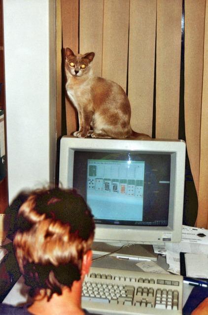 Lilac-on-monitor.jpeg
