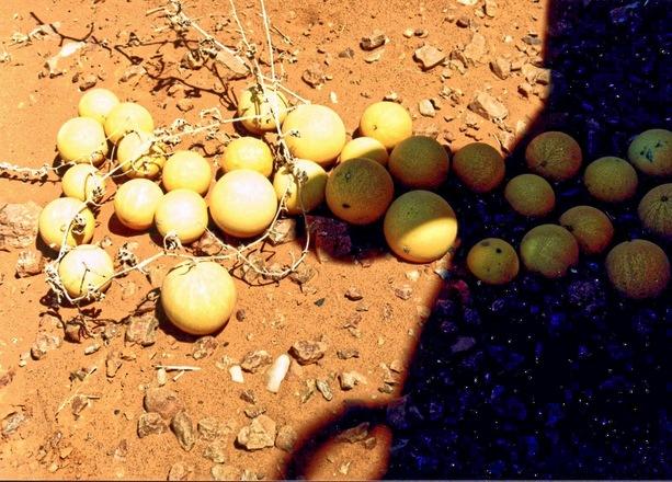 desert-tomatoes-1.jpeg
