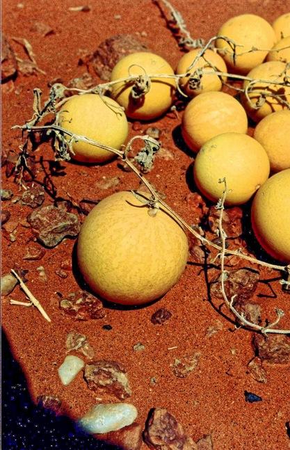 desert-tomatoes-2.jpeg