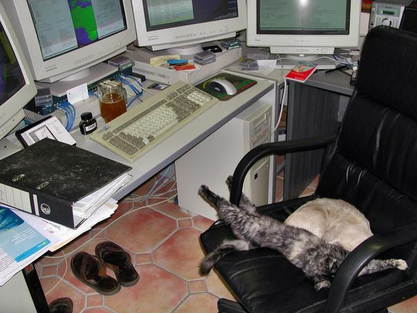 cats-in-office-1.jpeg