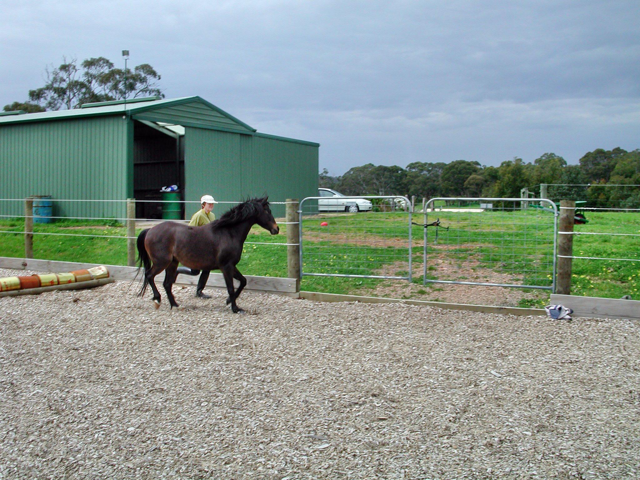 Horses-19.jpeg