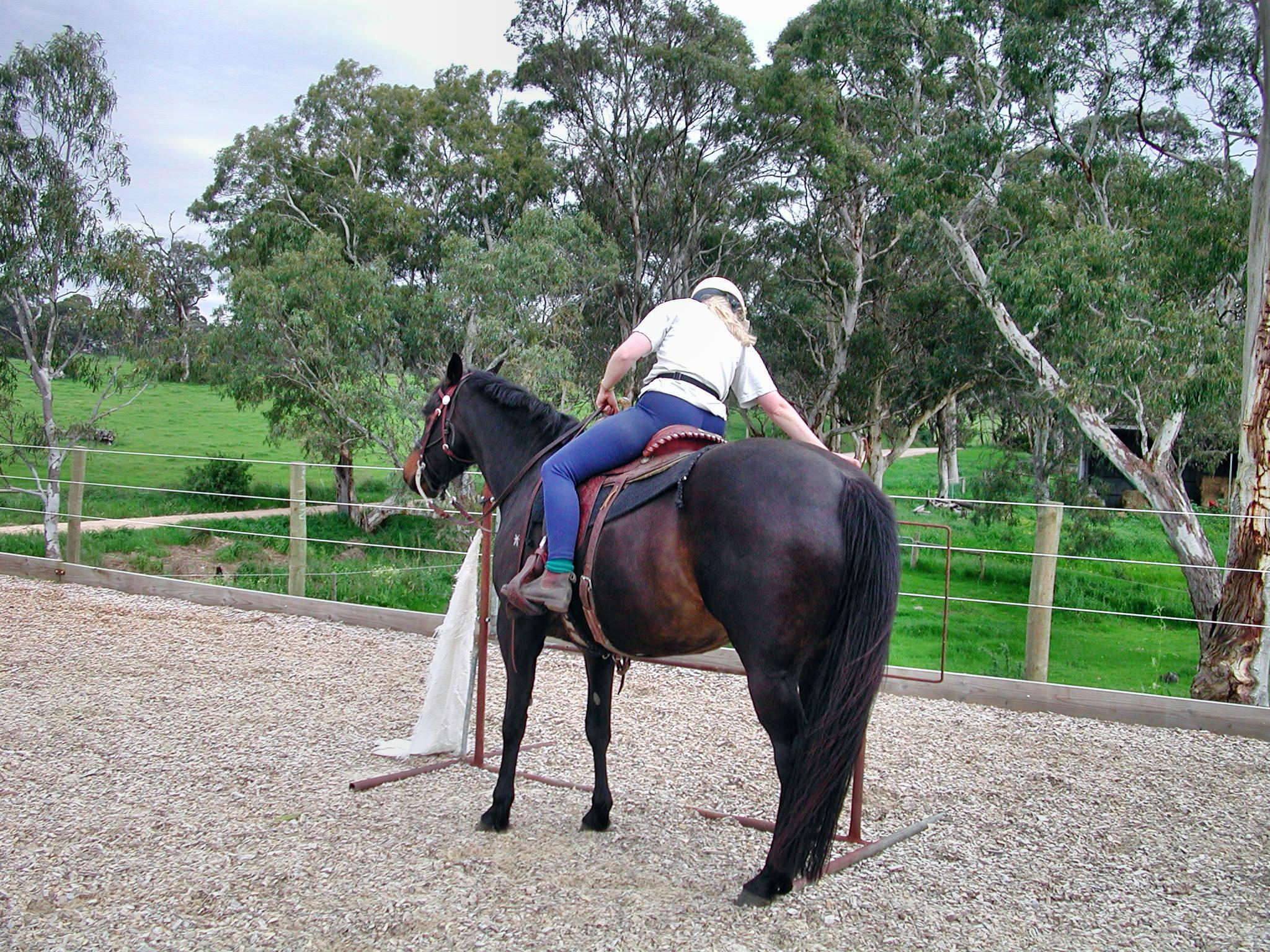 Horses-46.jpeg