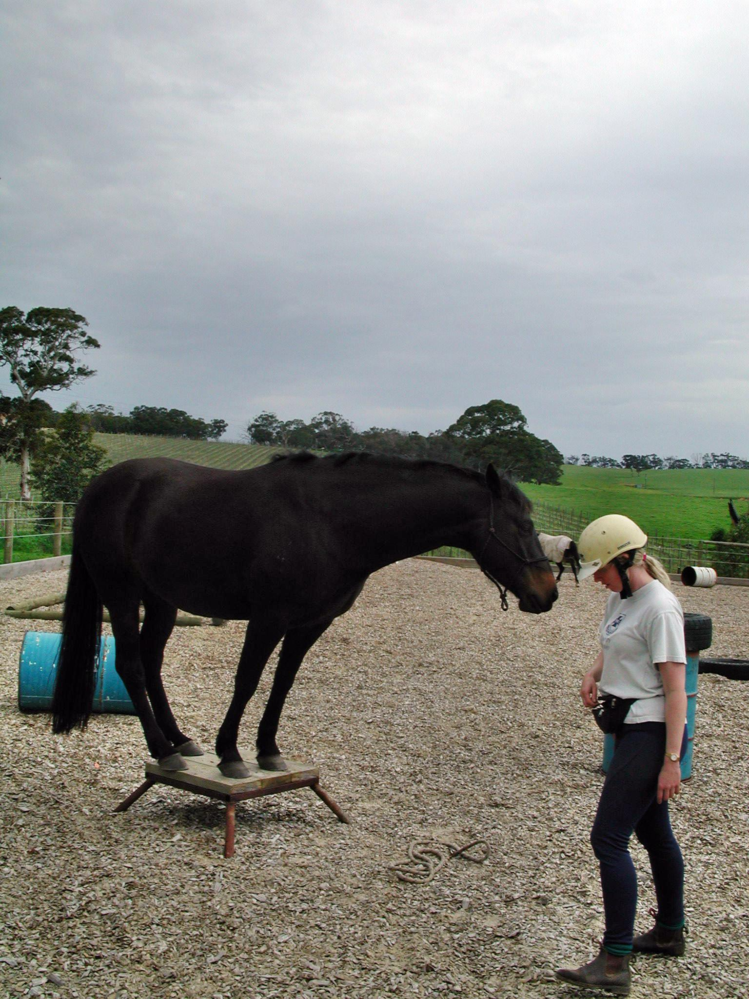 Horses-5.jpeg