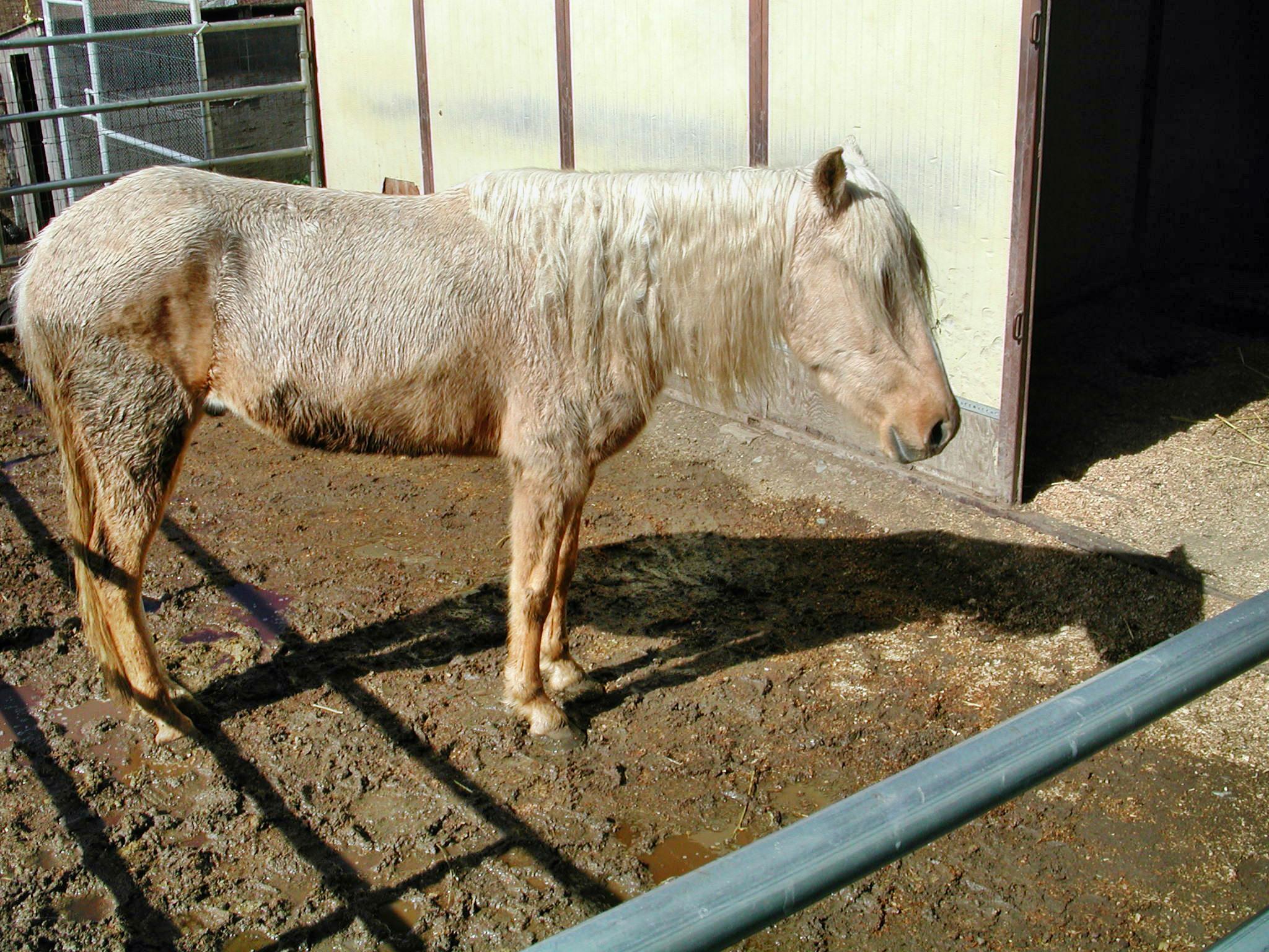 horse-12.jpeg