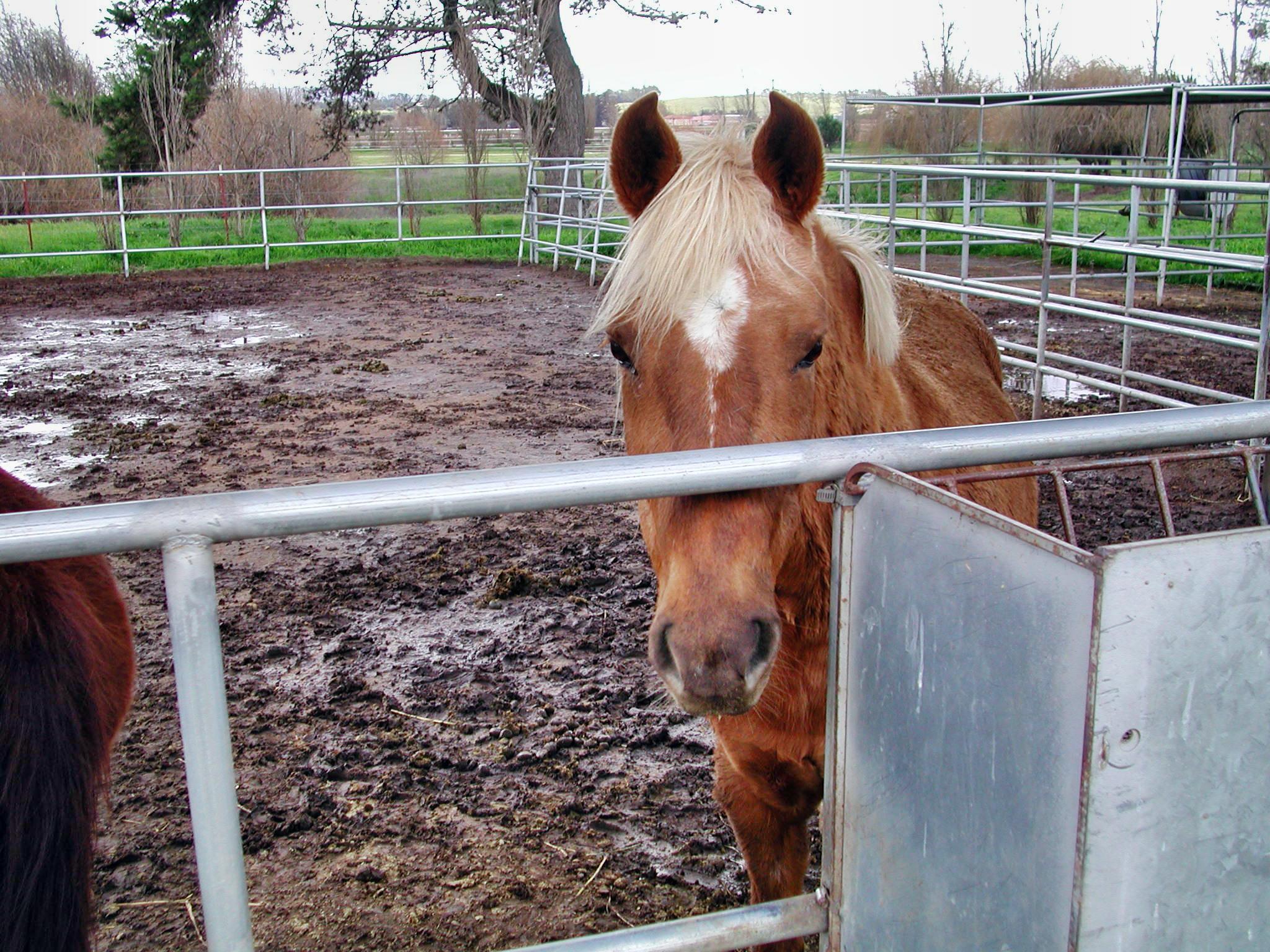 horse-13.jpeg