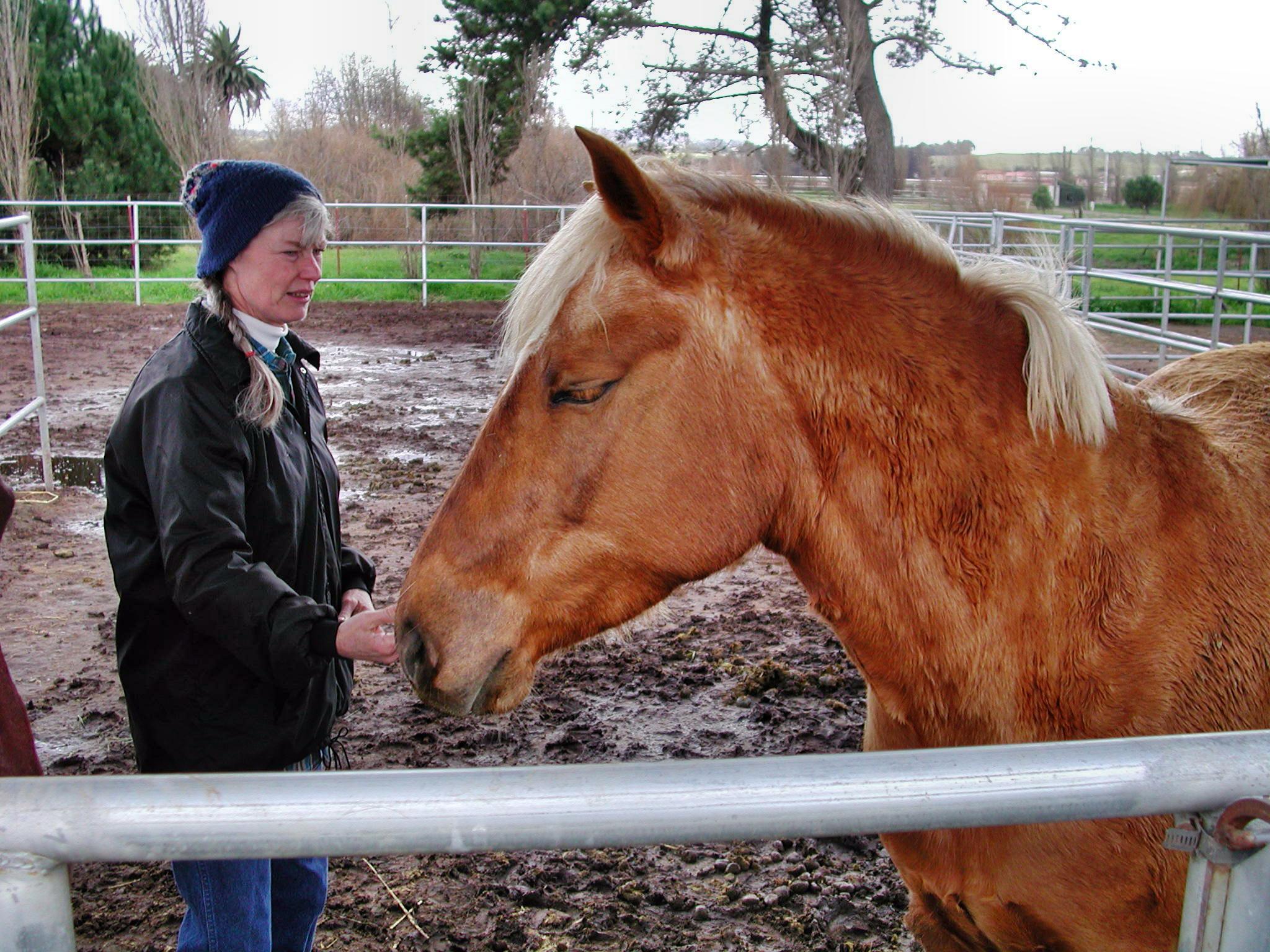 horse-15.jpeg