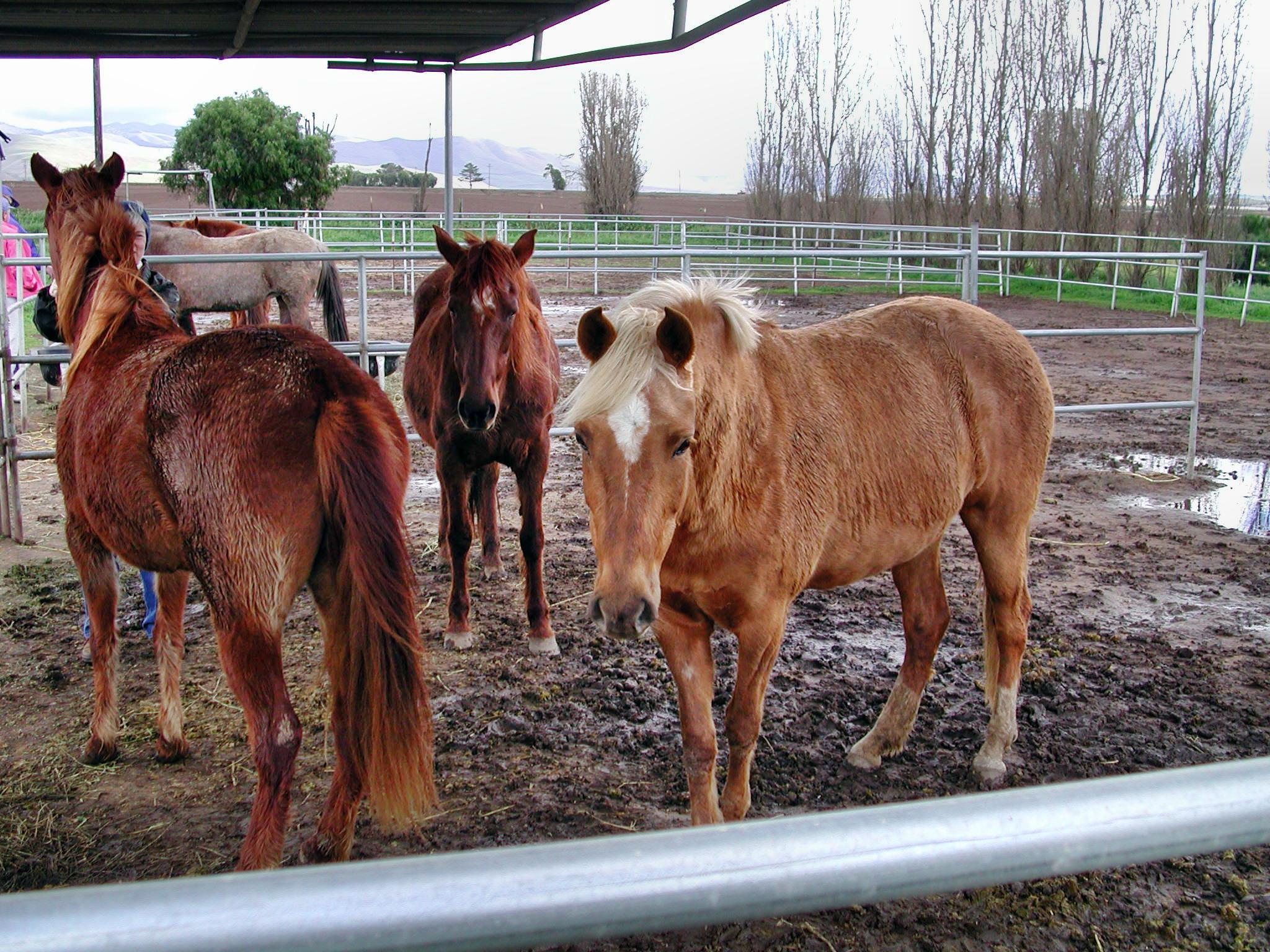 horse-16.jpeg