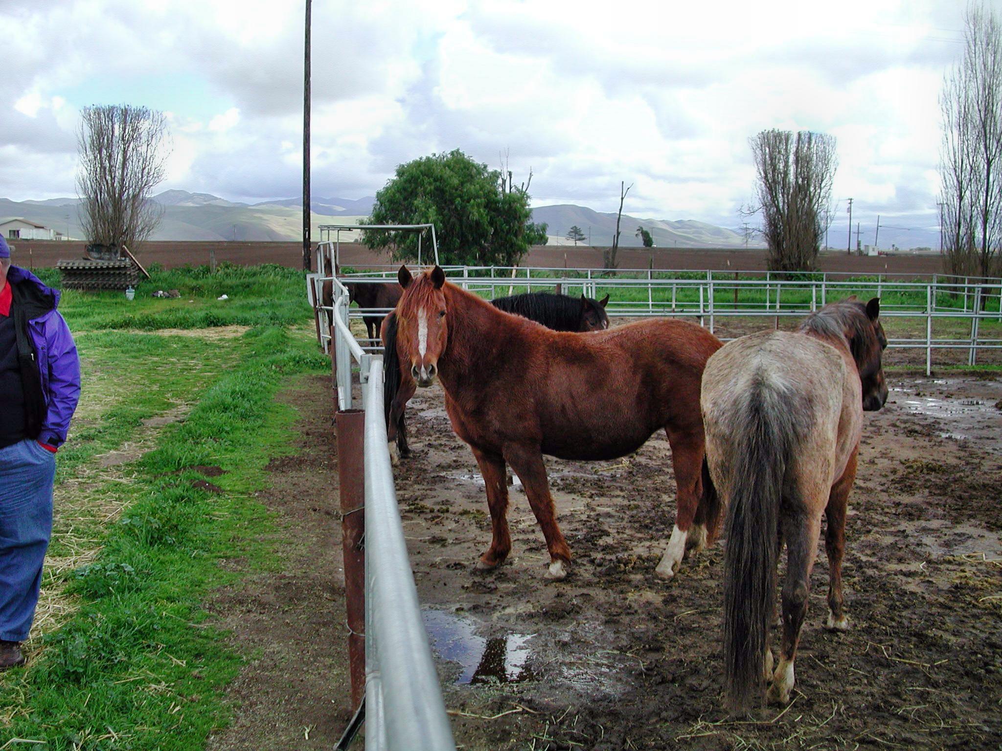 horse-18.jpeg