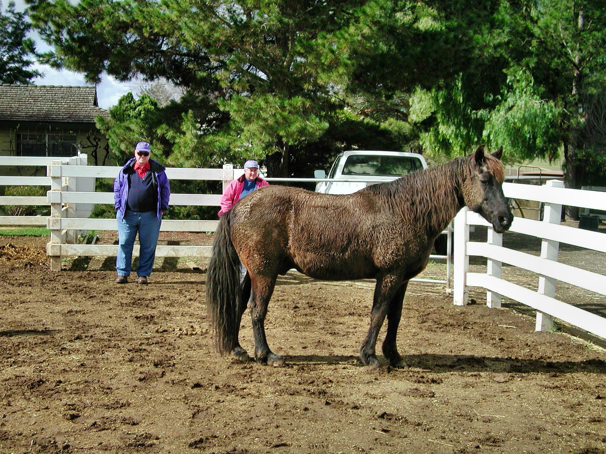 horse-2.jpeg