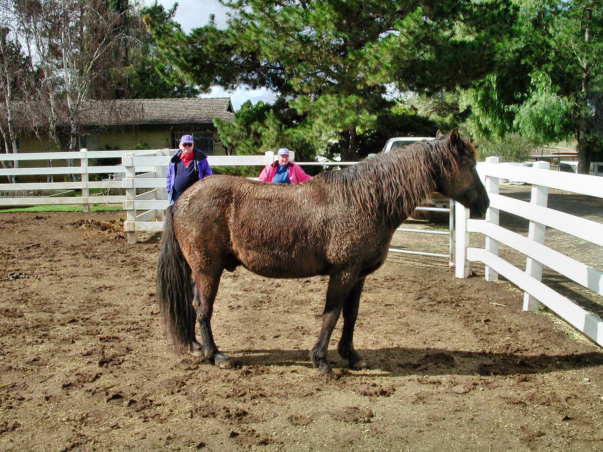 horse-3.jpeg