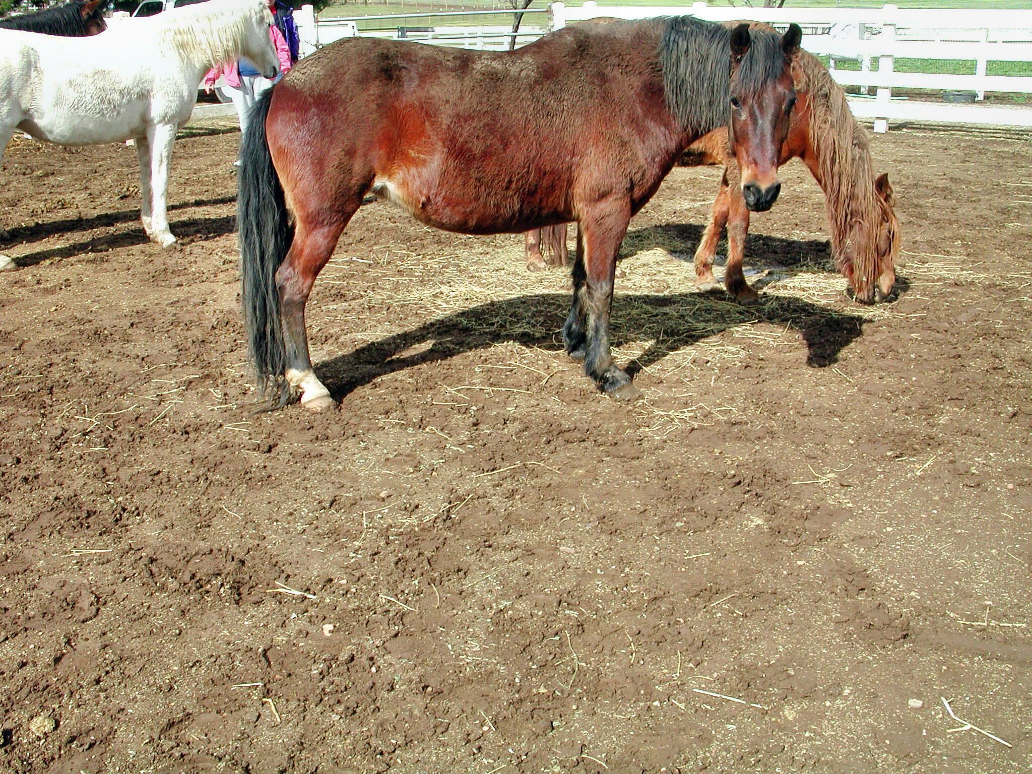 horse-6.jpeg