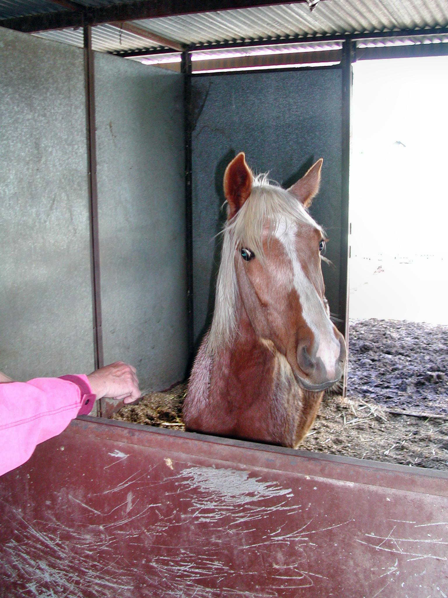horse-8.jpeg