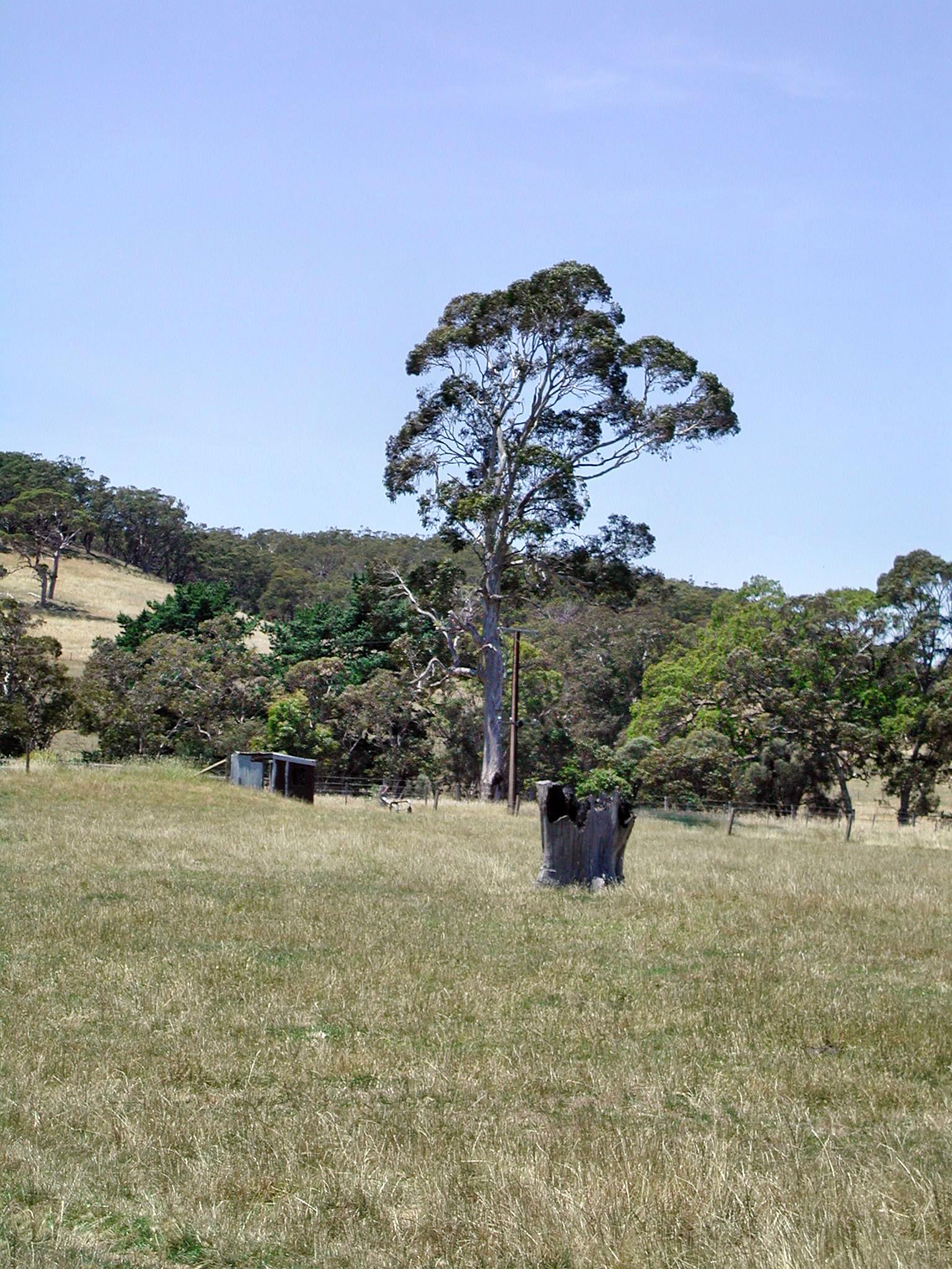 This should be black-stump.jpeg.  Is it missing?