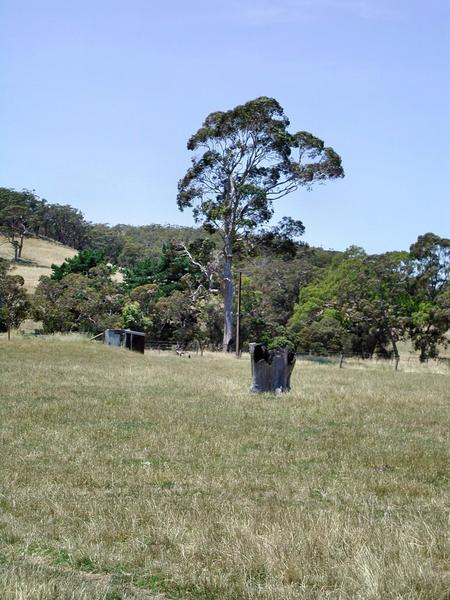 black-stump-2.jpeg