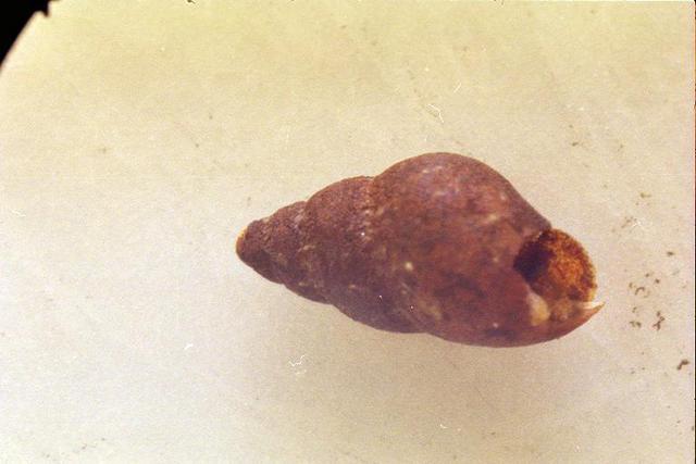 snail-1.jpeg