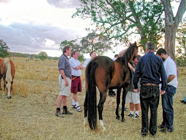 horses-17.jpeg