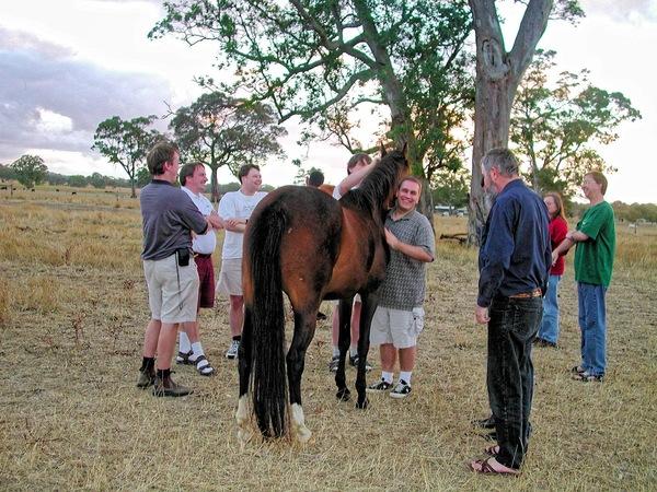 horses-18.jpeg